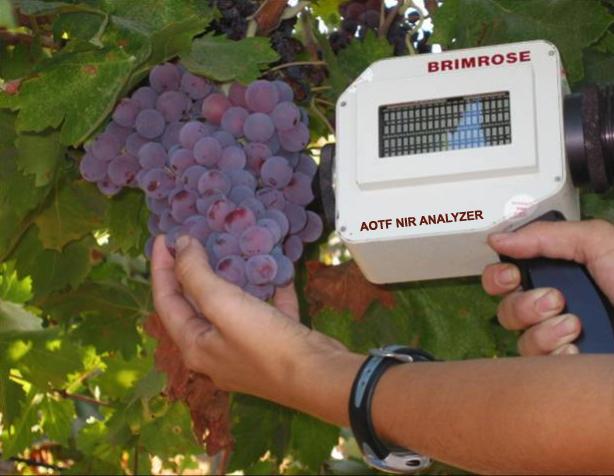 Grape Analysis