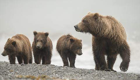 BrandonTBrown-grizzly-LC-9_large.jpg