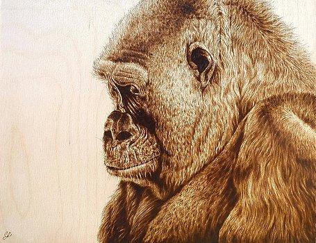 pensive-western-lowland-gorilla-cara-jordan.jpg