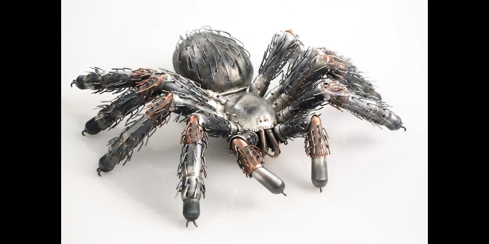 tarantula-1.png