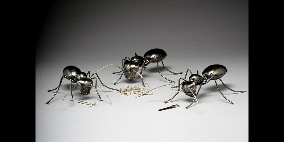 Carpenter-Ants-1.png