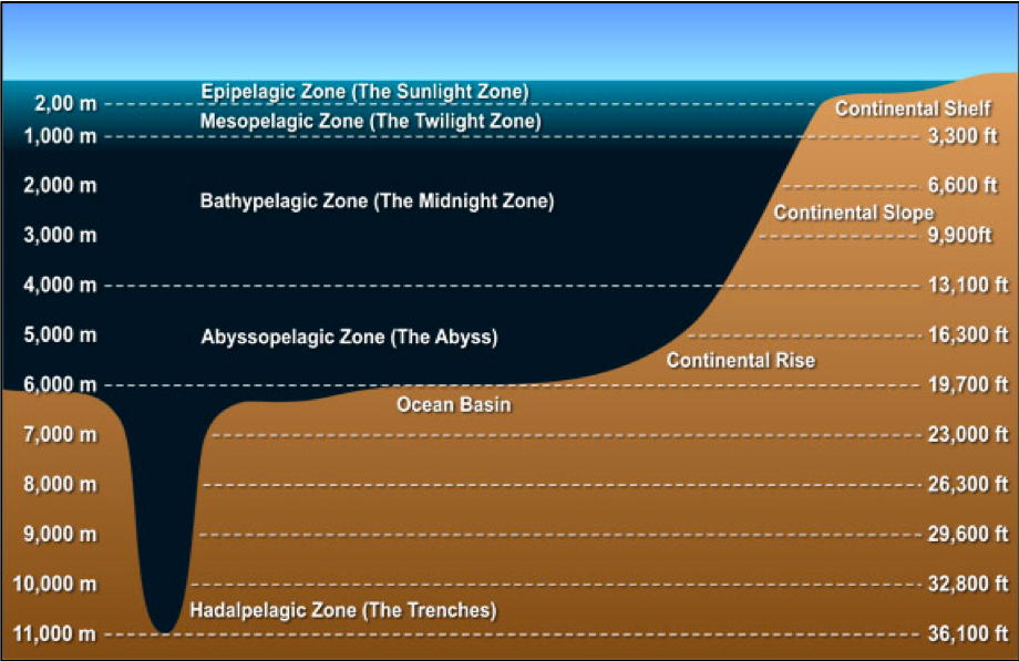 """Abyssal plain""—the deep ocean floor—which covers more than half the planet's surface. -A Short History by Bryson.    • The average depth of the ocean is 3.86 kilometres, with the Pacific on average about 300 metres deeper than the Atlantic and Indian Oceans. Sixty per cent of the planet's surface is ocean more than 1.6 kilometres deep. -A Short History by Bryson.    • Average Depth ~3730m.   • Volume of Ocean Water: 1370km3   • Wave Velocity= wavelength/period   • Abyssal Zone <6500'"
