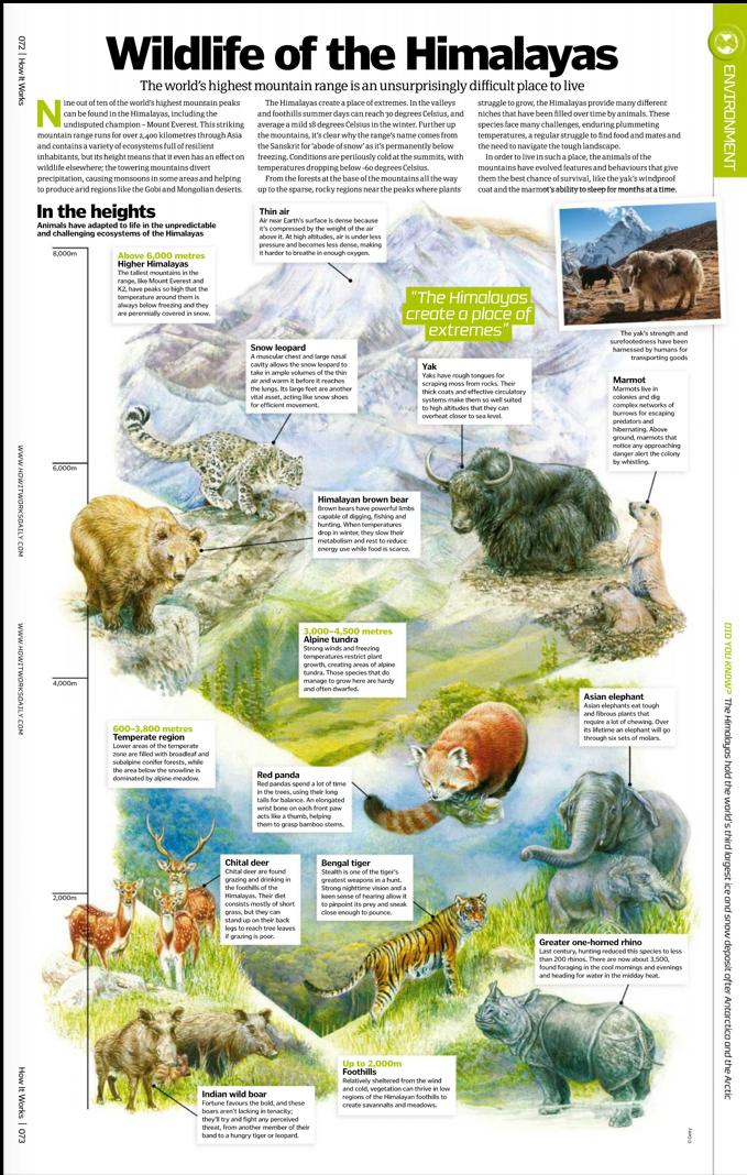 Himalayan Wildlife.png