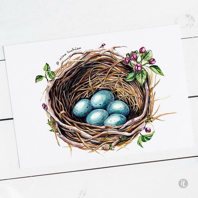 #wildlife #illustration #nest #blackbirdnest #blackbird #doodle #illustrator #illustration #personalproject #birdnest #birdnestillustration #watercolor #watercolour #watercolornest #blackbird #wildbirds #nesting #gardenbirds #blueeggs #blackbirdeggs #springeggs #mierla #amsel #amseleier #amselnest #britishbirds #nesting #birdsnest #cherryblossom