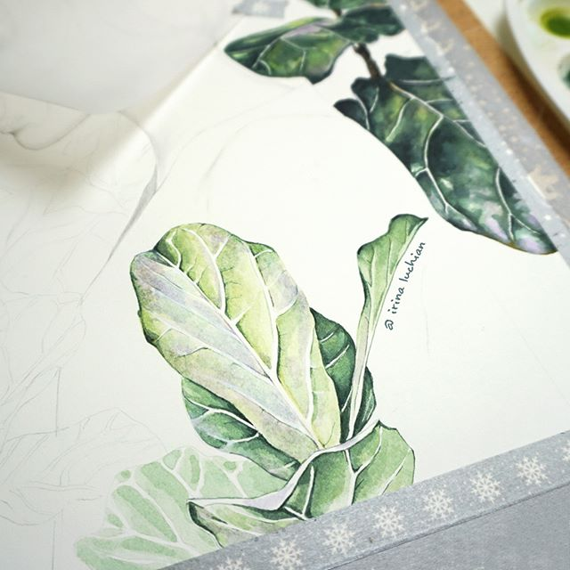 Some more Fiddle Fig leaves in progress 🎨 😊