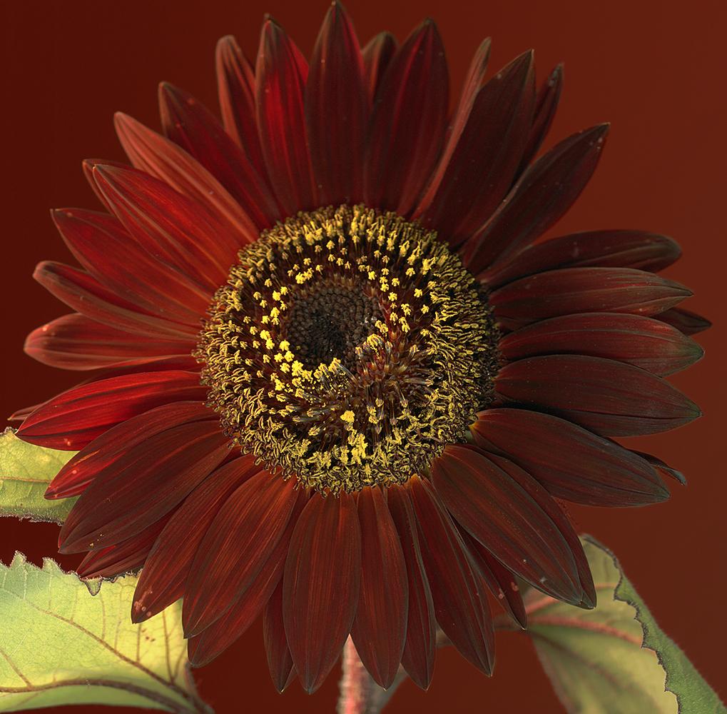 sunflowerday2print2004.jpg