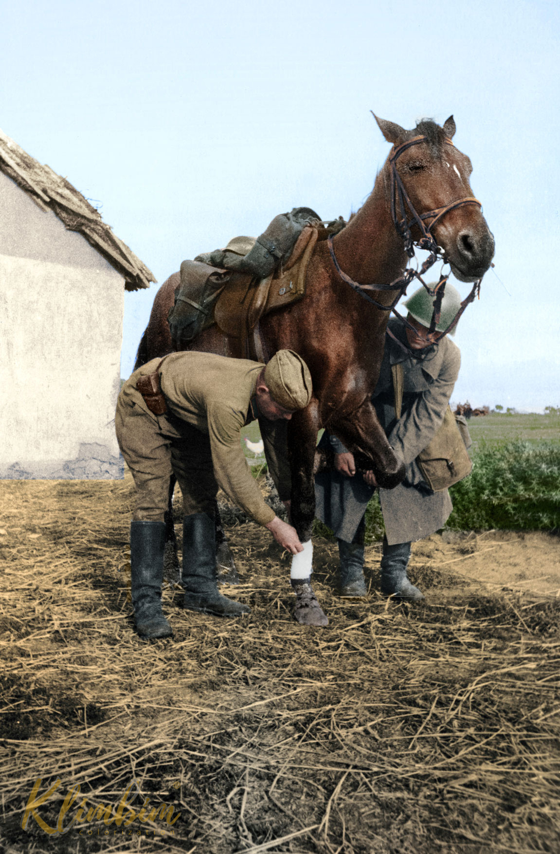 Soviet soldiers treating an injured horse