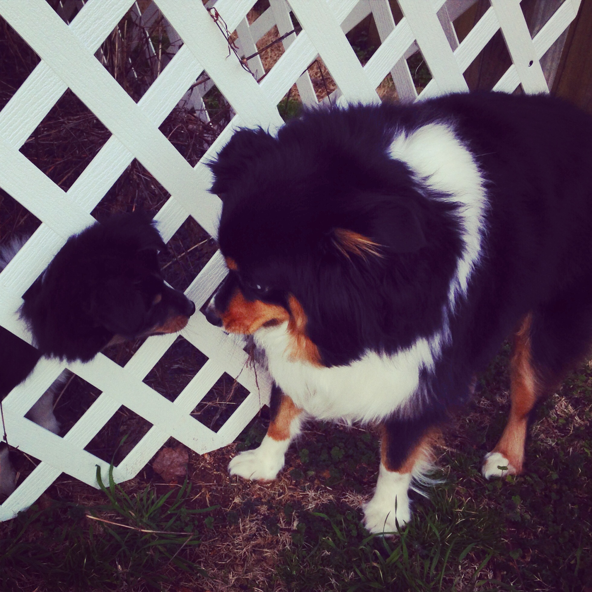 Bailey's favorite way to hang out with Rosie when she was a puppy- with her head stuck in a fence. :)