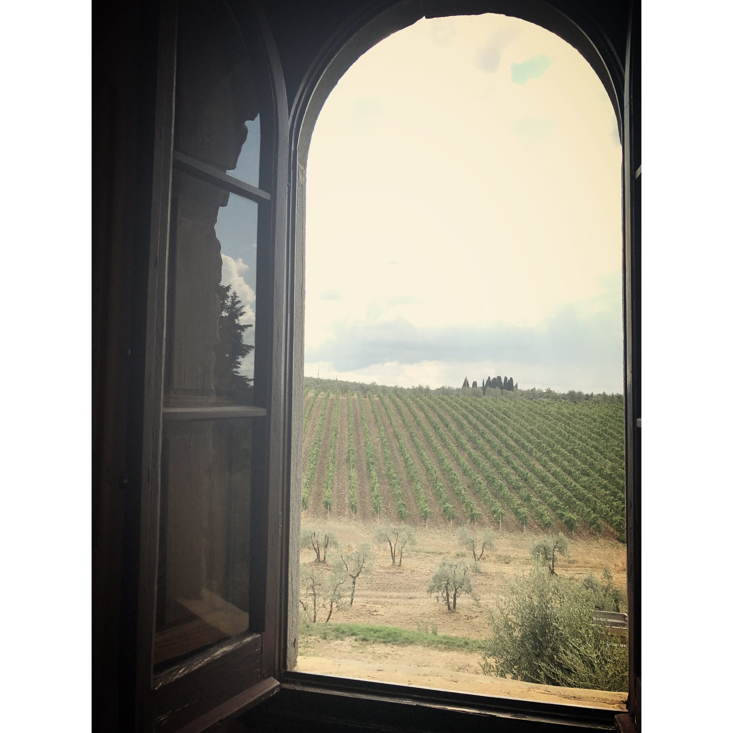this was the view from our window at the first vineyard we visited on our wine tour. the knowledge and the tastebuds were on a different level there! we visited through chianti. the little trees in front our olive trees.
