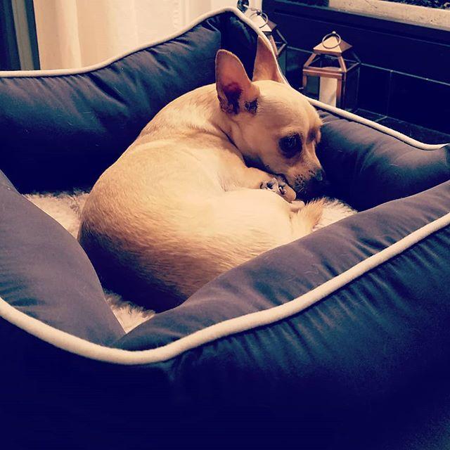 #smarthome #smartdog #smarthomedog  Dogs can use smart homes too www.onehoursmarthome.com