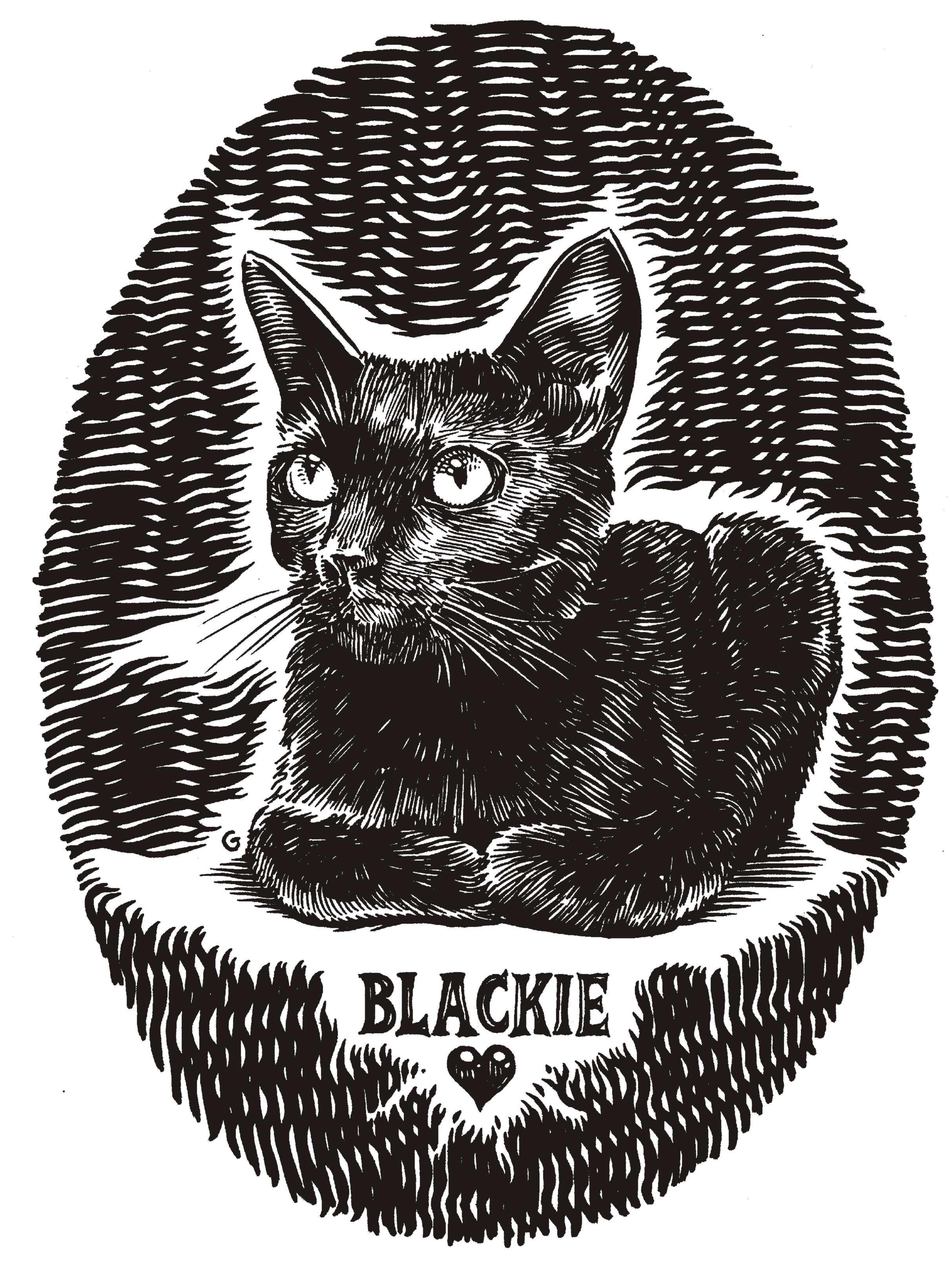 blackie cat.jpg