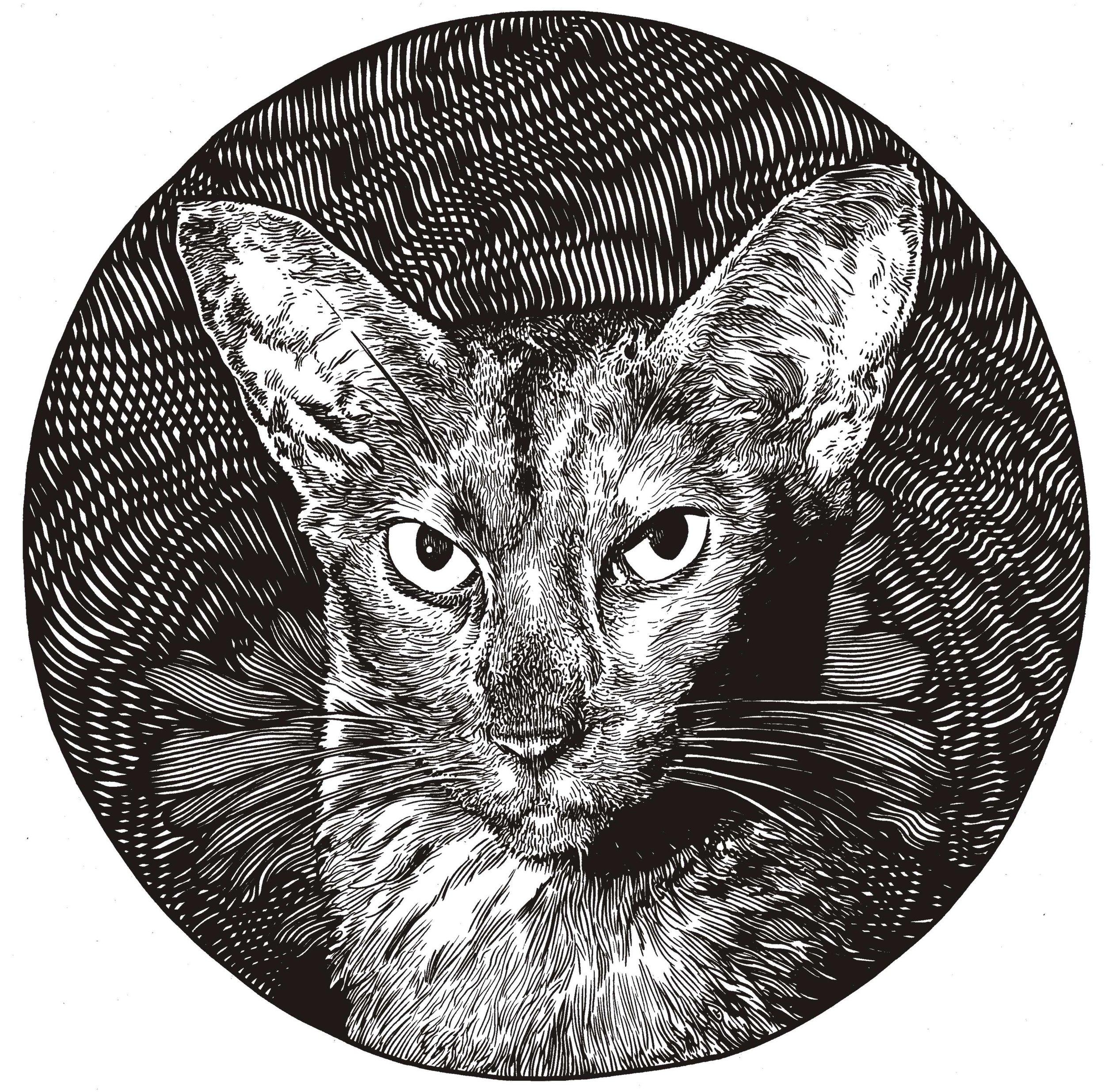 Liz's cat.jpg