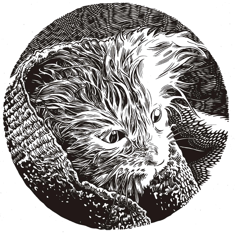 wet kitty.jpg