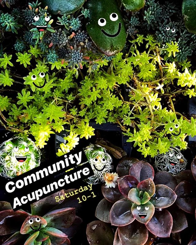 🌟COMMUNITY ACUPUNCTURE🌟  These Saturdays are really becoming an office fav. The healing, relaxation, joy and respect for self care in the group setting is so profound✨ Reserve one of the last few spots now or enjoy our reception area fun [teas, nutrition resources, coloring books, oh my! ] while you wait as a walk in. 🍋📚☕️🍃🍃🍃🌸 Check our website and Facebook page for all the deets.