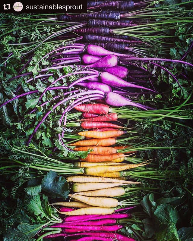 Hawthorn SPRING CLEANING group cleanse starts soon! Get ready! @hawthorncleansebuddies  #Repost @sustainablesprout with @get_repost ・・・ Rainbow root vegetables just don't lose their charm 🙌🌈🥕➡️ what's your favourite? 👨🌾👩🌾 . . Repost/📷: @chefdanielagerson Tag us and Use #sustainablesprout to be featured