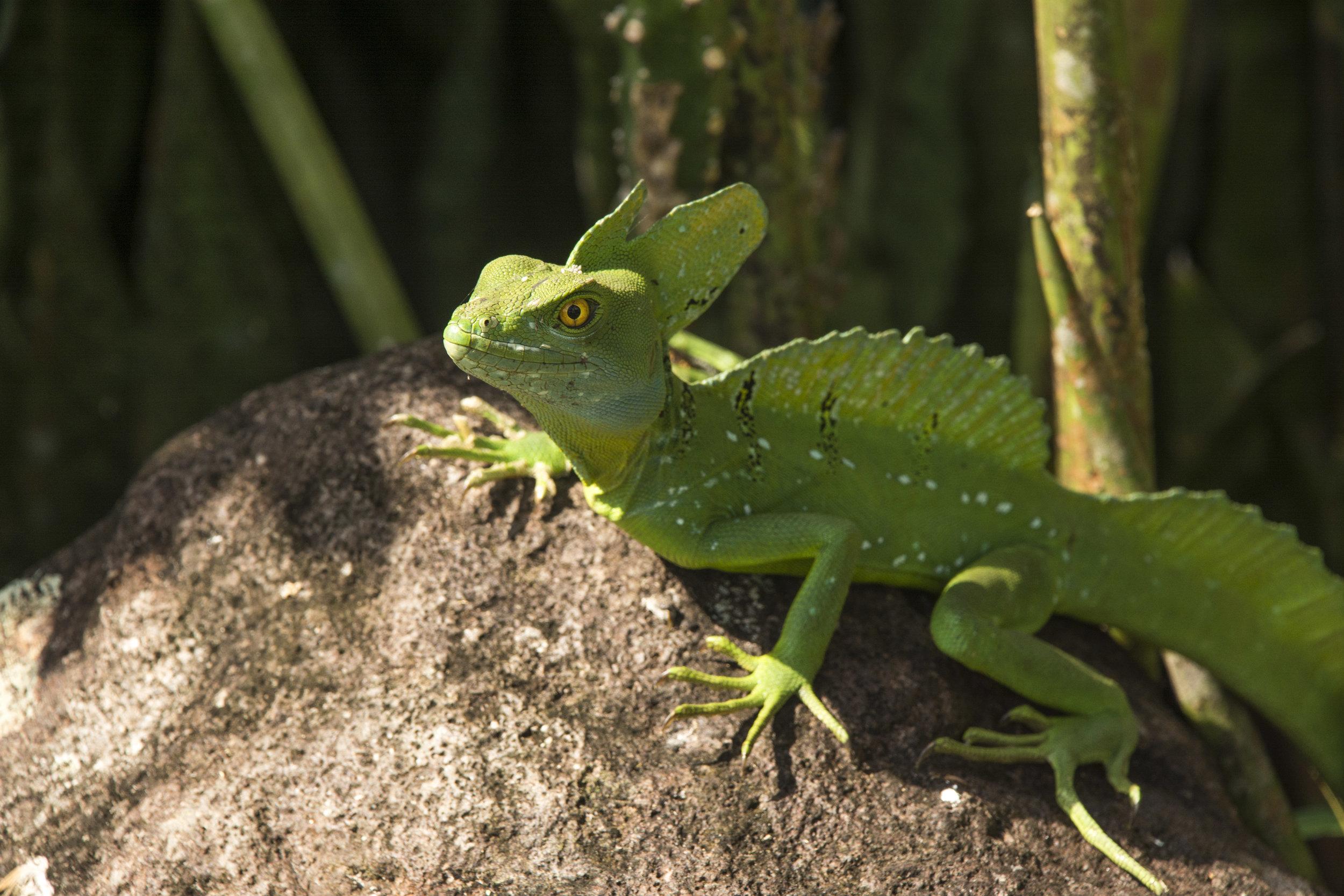 Costa Rica-0562.jpg
