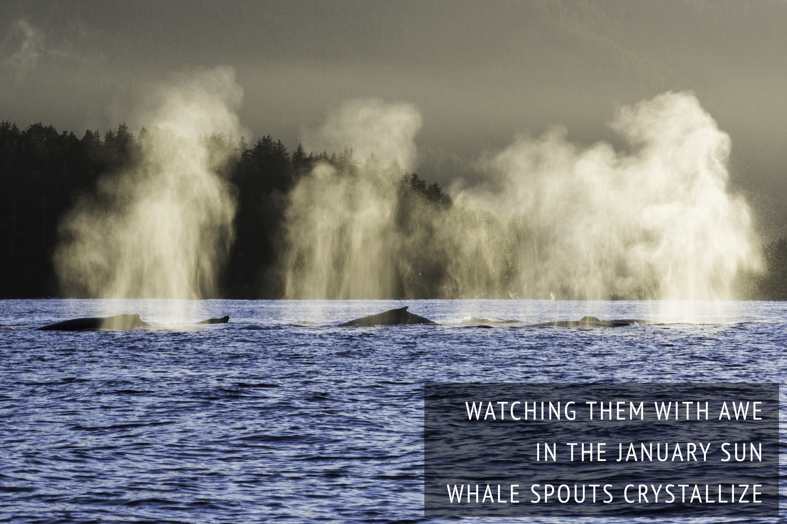 whalespoutshaiku2.jpg
