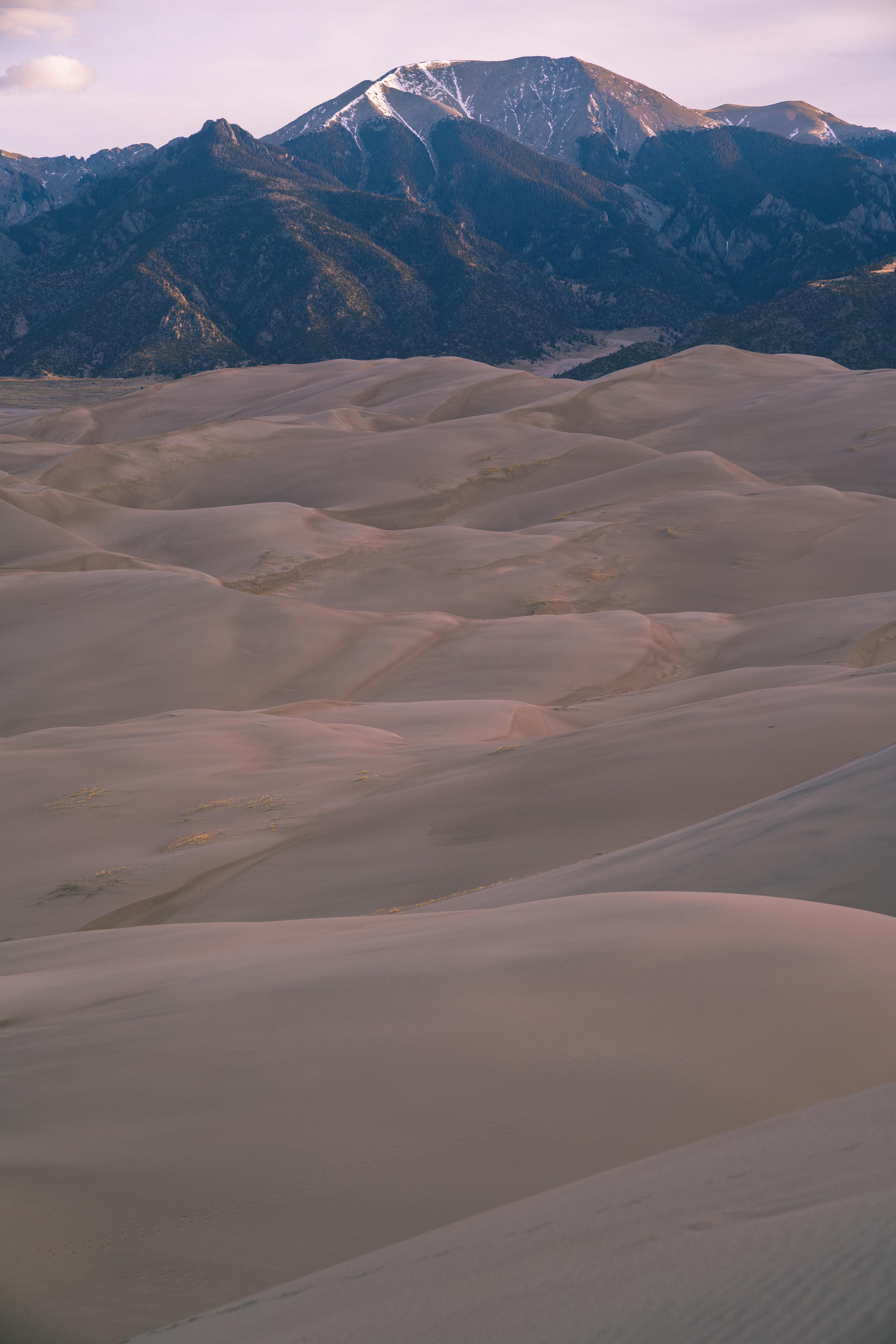 Dunes Feral 52.jpg