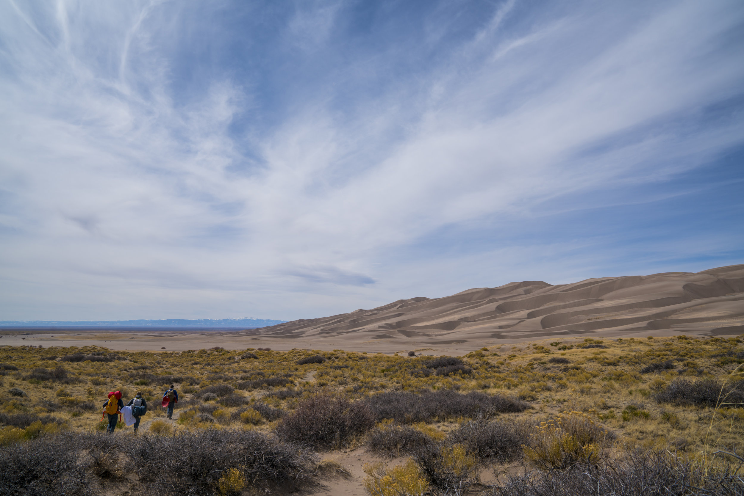 Dunes Feral 21.jpg