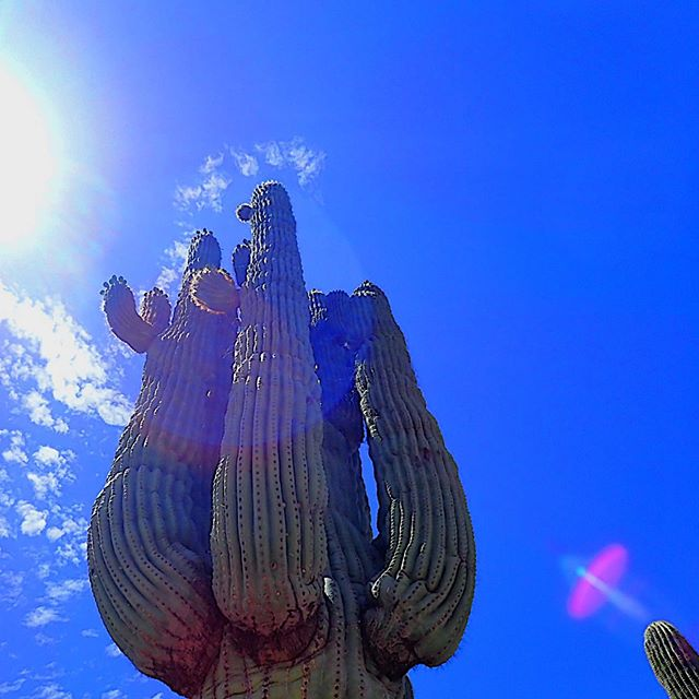 If JJ Abrams got into cactus photography...