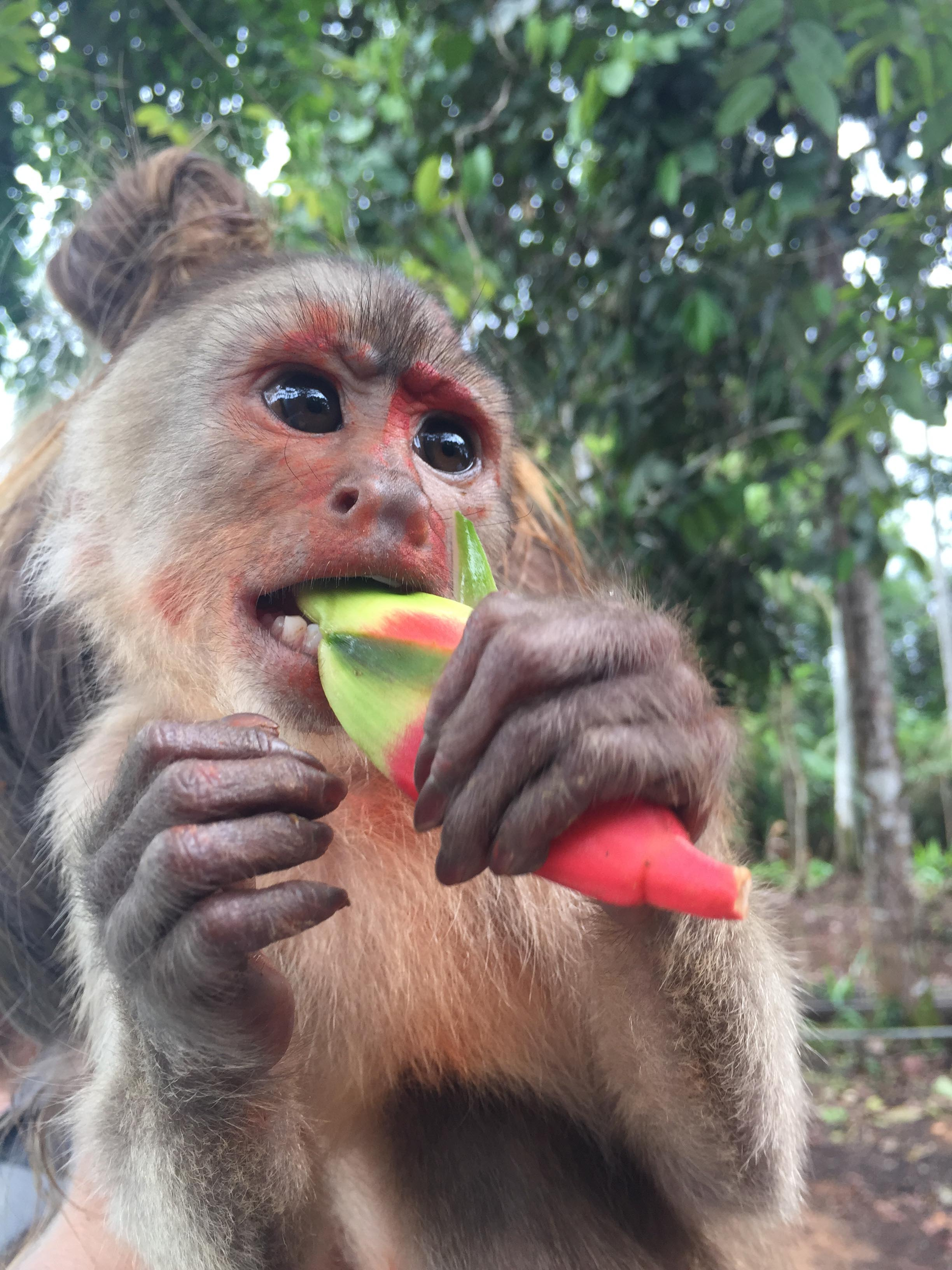 Monkey in the Amazon Rainforest.