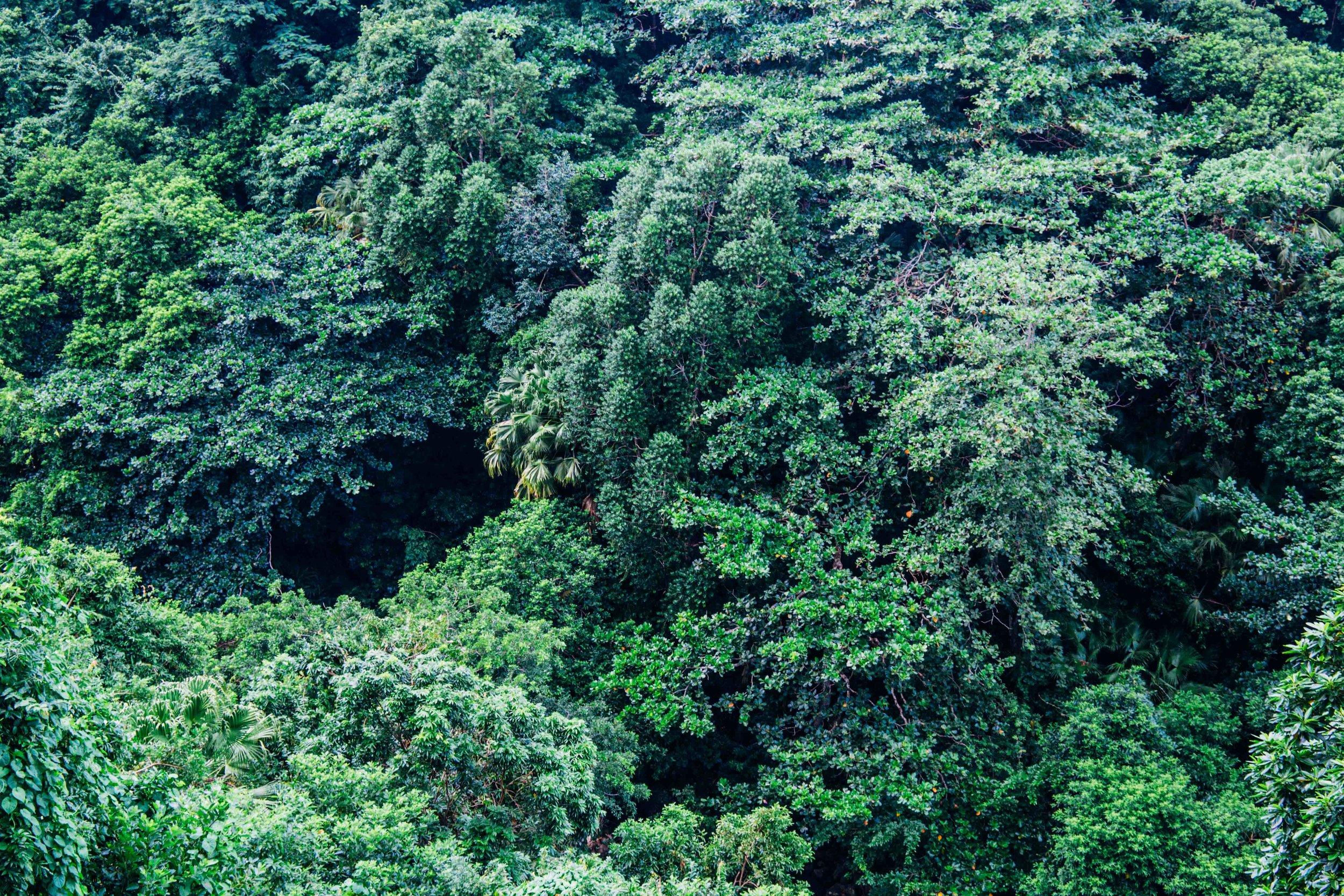 Lush green in Mauritius