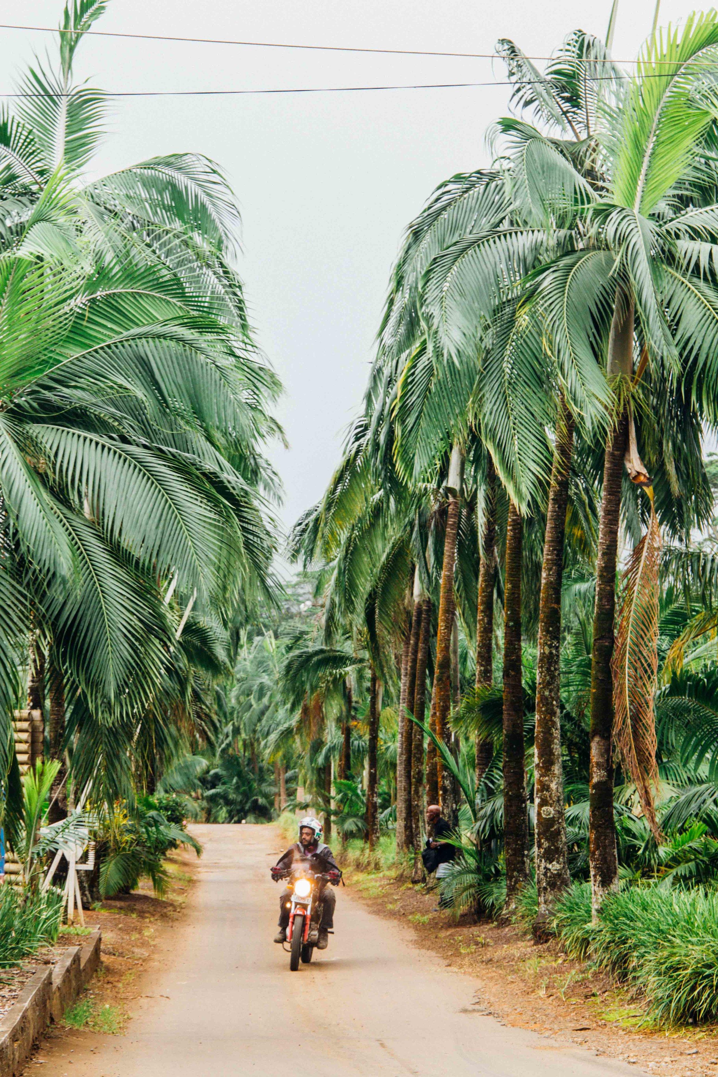 Road near the Seven Coloured Earth, Mauritius,