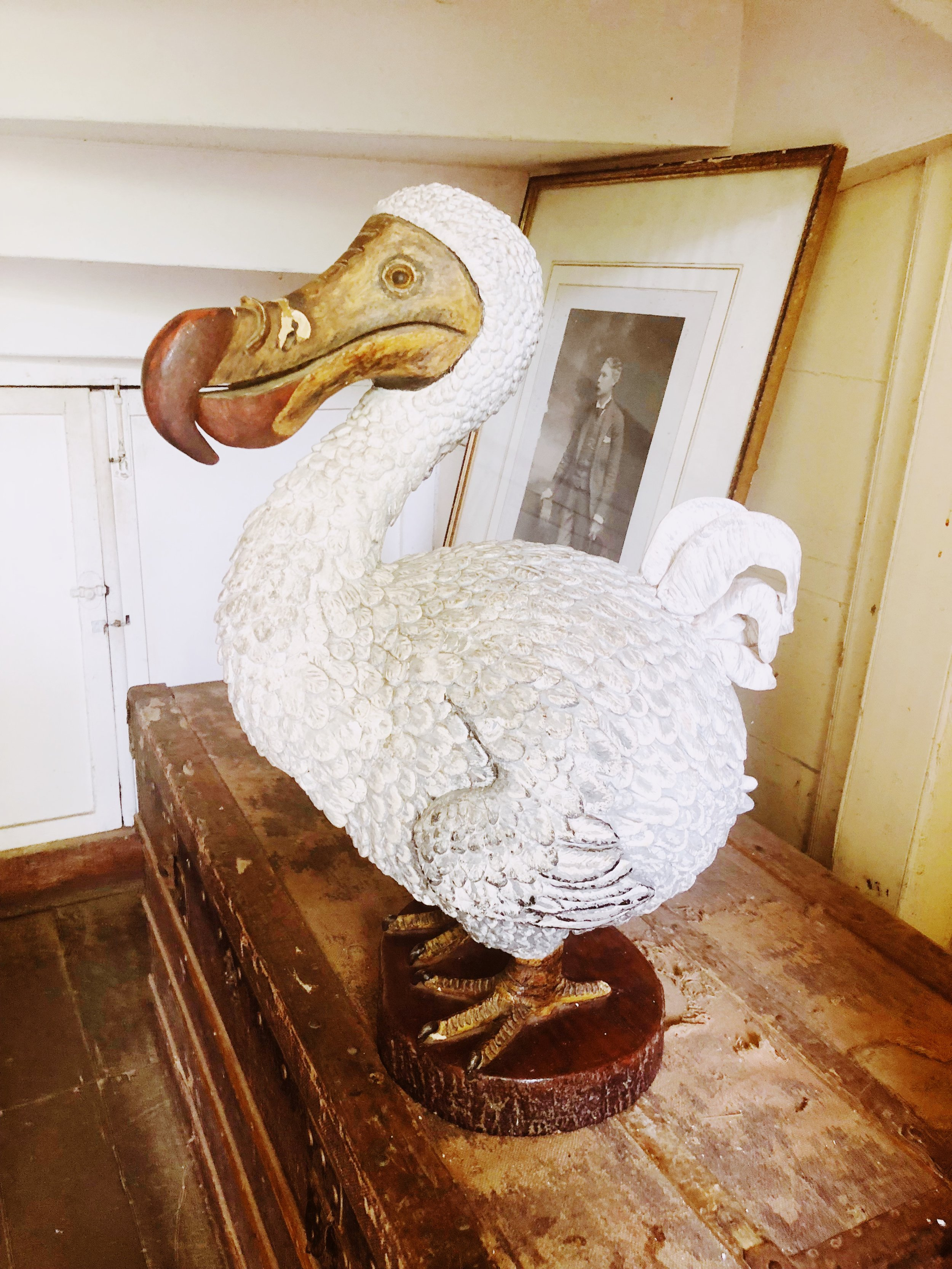 The Dodo of Mauritius - it's about that big!