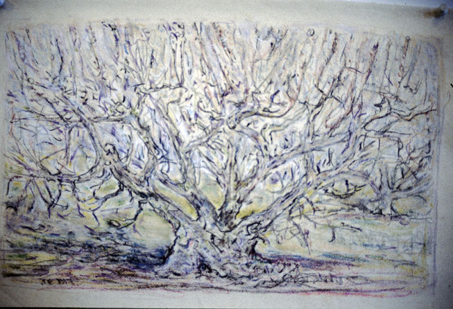 Apricot Tree, 1997, pastel & charcoal on paper, 29 x 44 cm