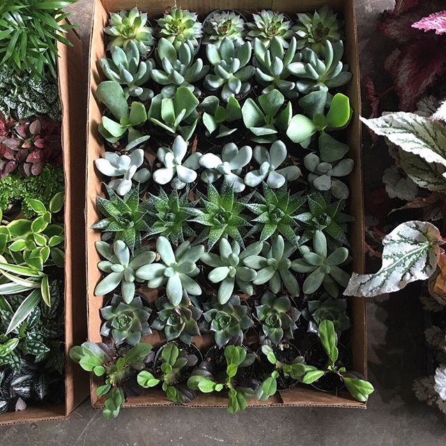 Have you booked a private event or company offsite @gurtonsworkshop and are looking for something fun to add to your event? Gurton's now offers private terrarium and plant mounting workshops for parties of eight or more. Email us at hello@gurtons.com for rates and details.