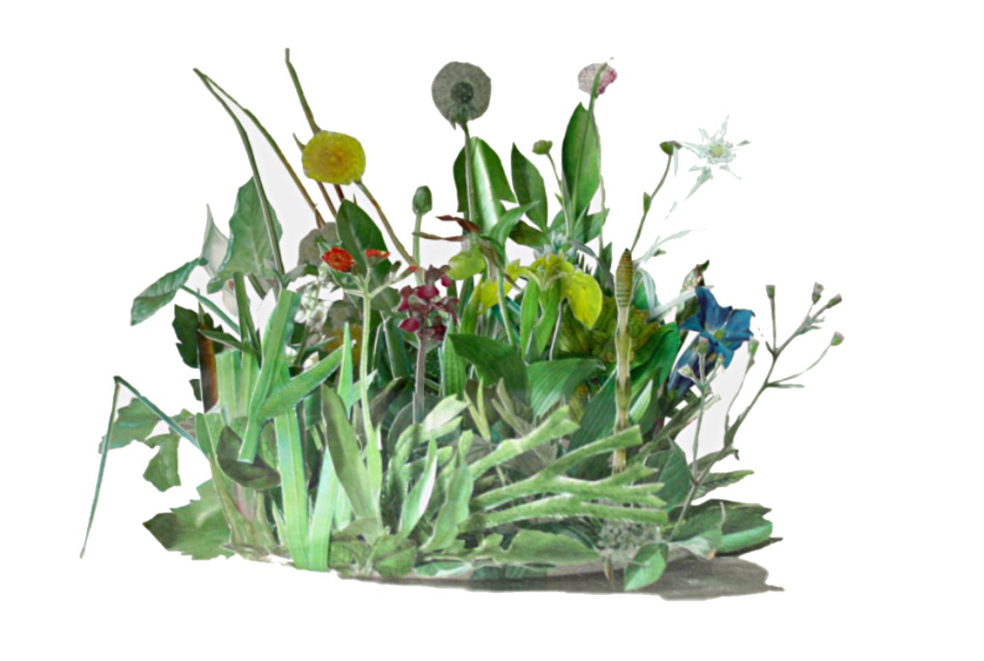 Herborium, Rodrigo Arteaga