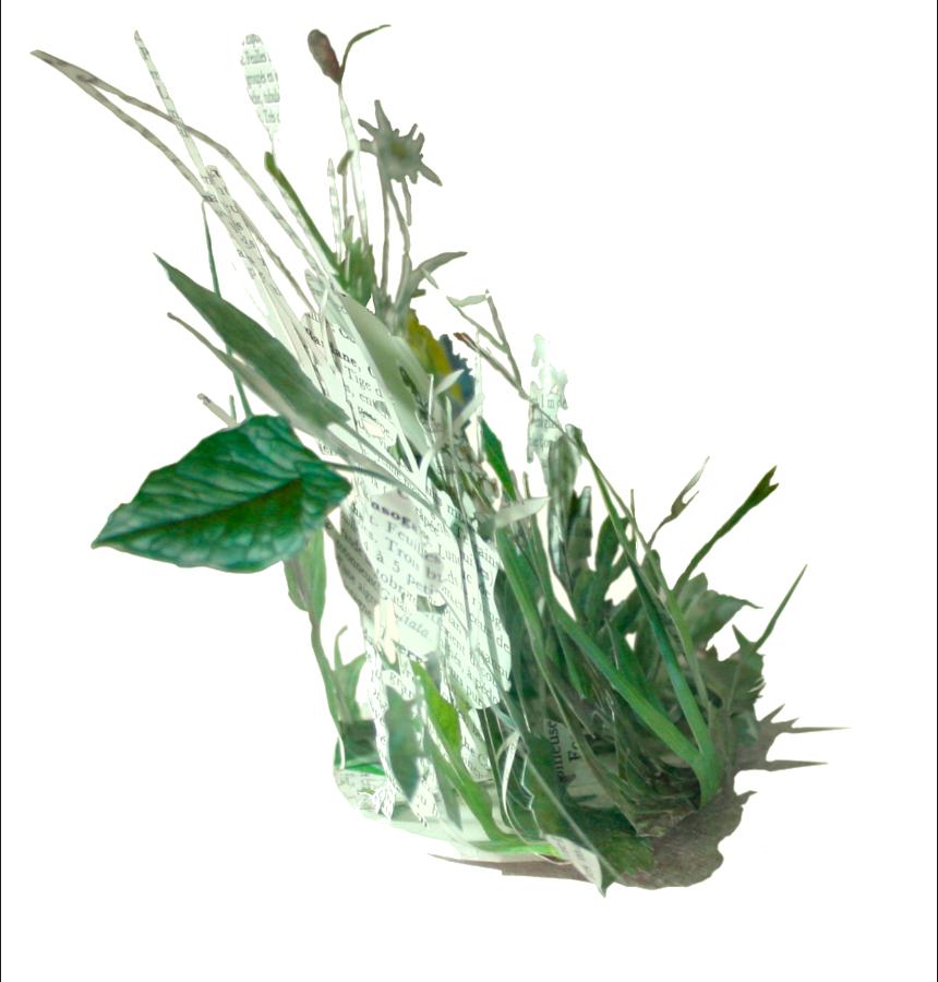 Herborium, Rodrigo Arteaga - avant restauration