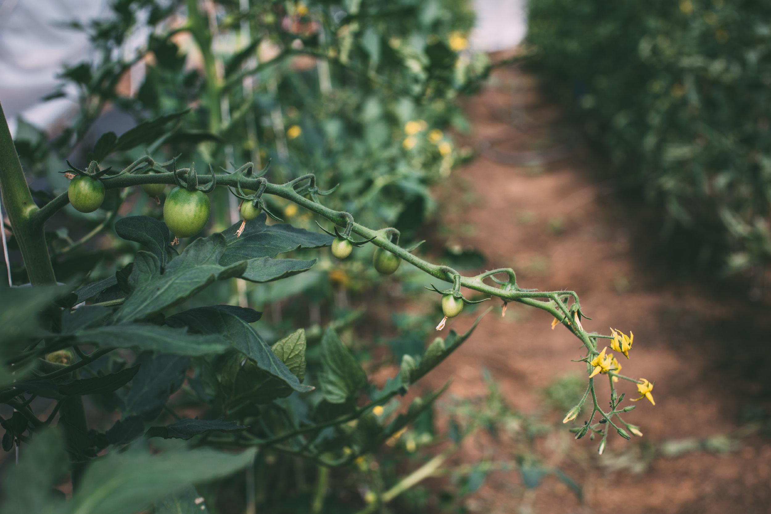 Shiloh Farm-27.jpg
