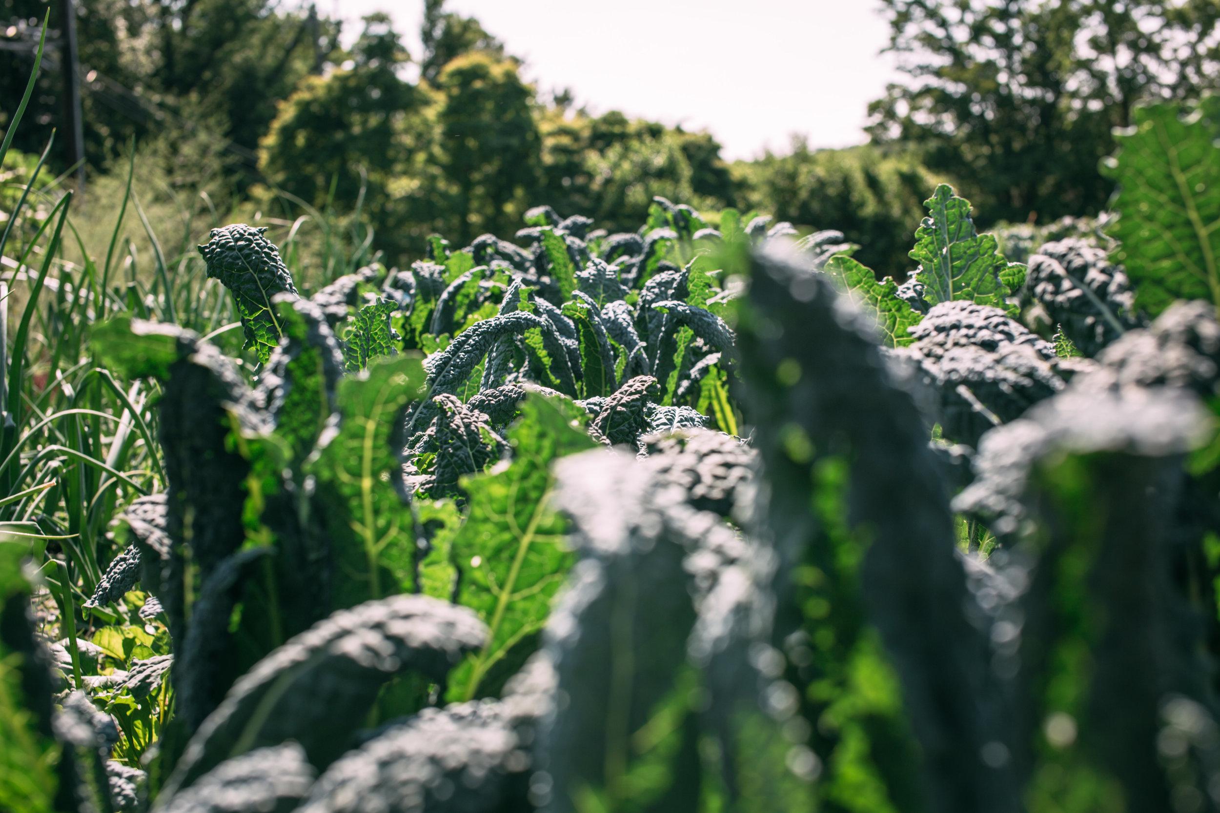 Shiloh Farm-48 (1).jpg