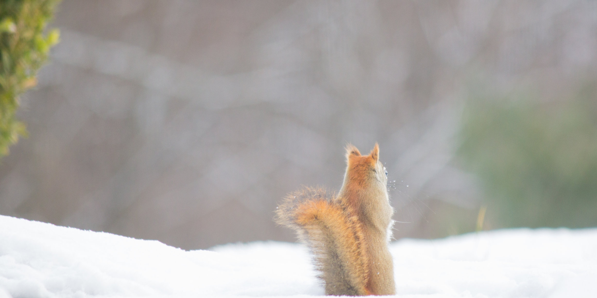 Squirrel in snow by Aaron Clay