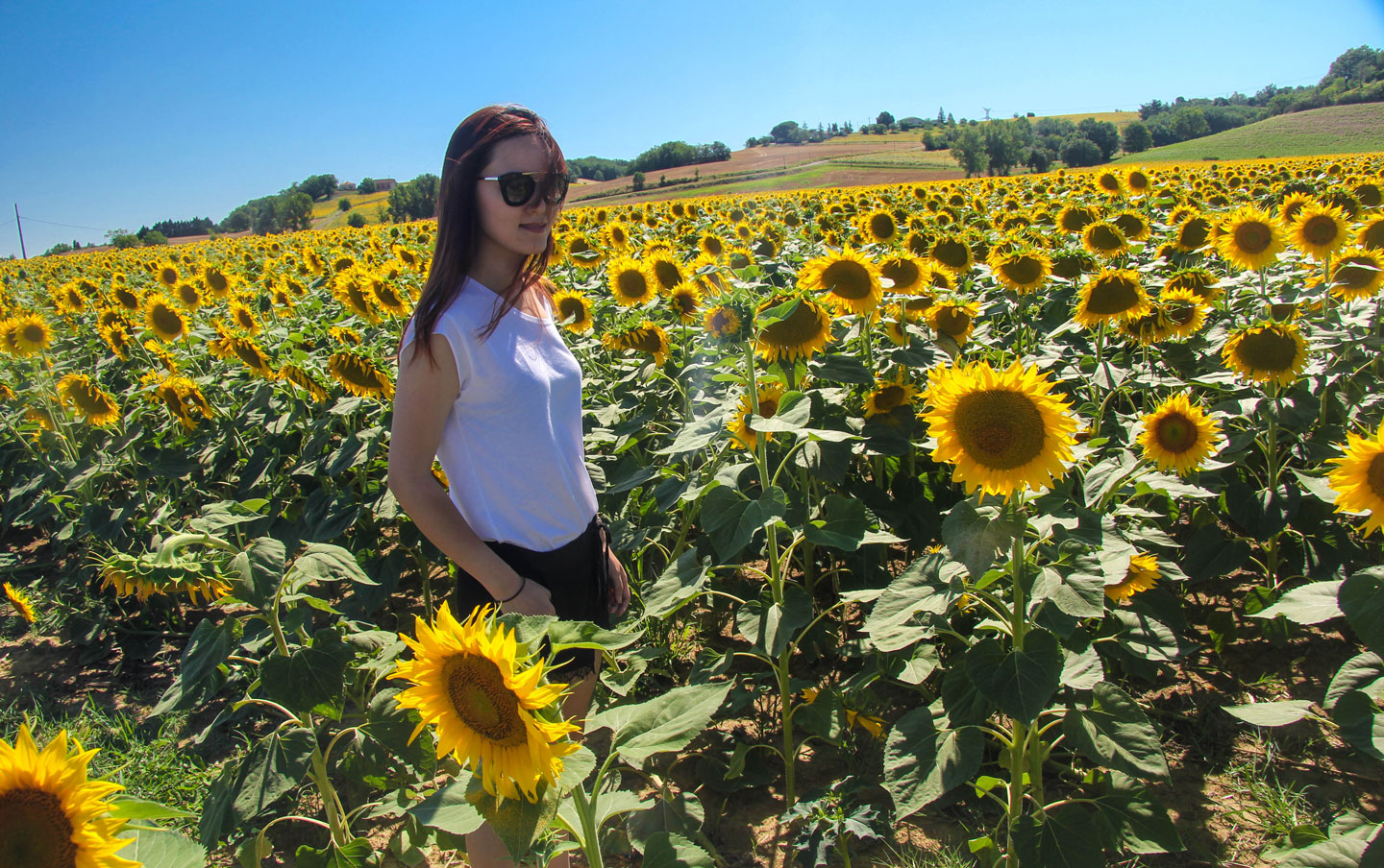 Sunflower field Road trip, southern France