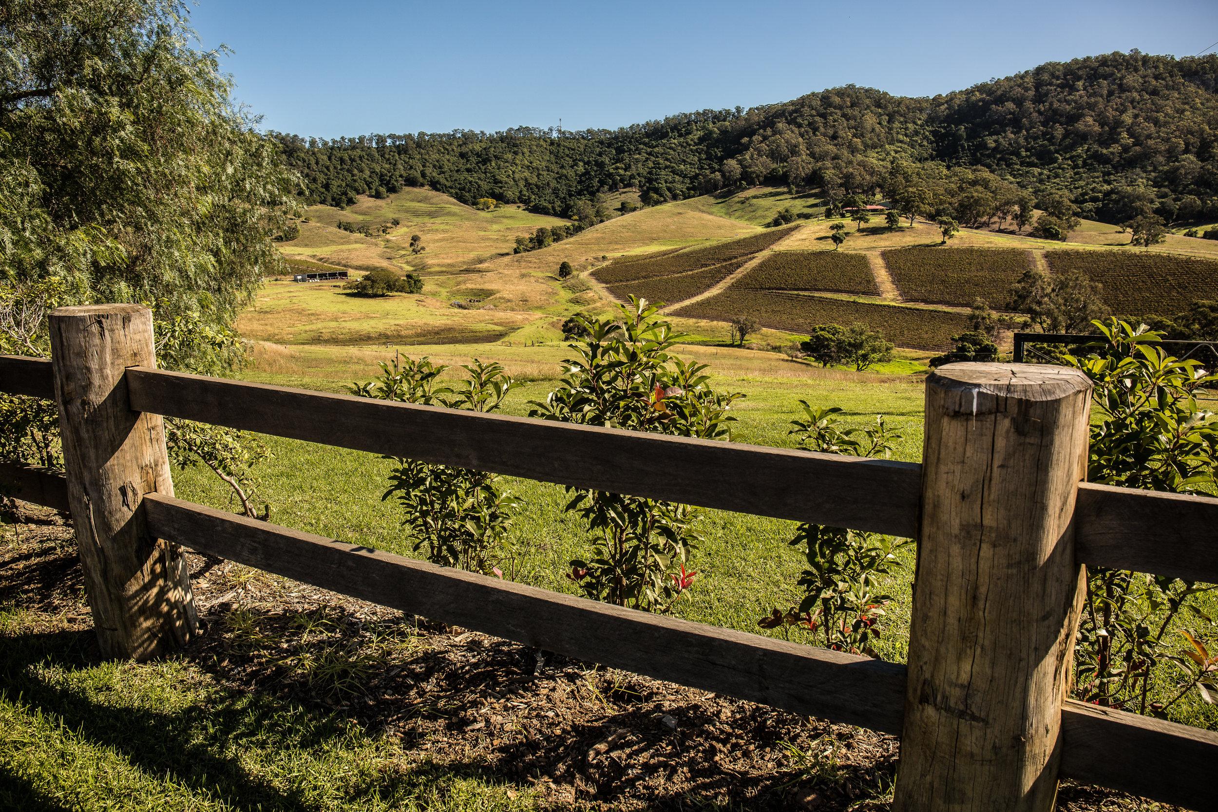 Hunter Valley Blog Post (23 of 39).jpg