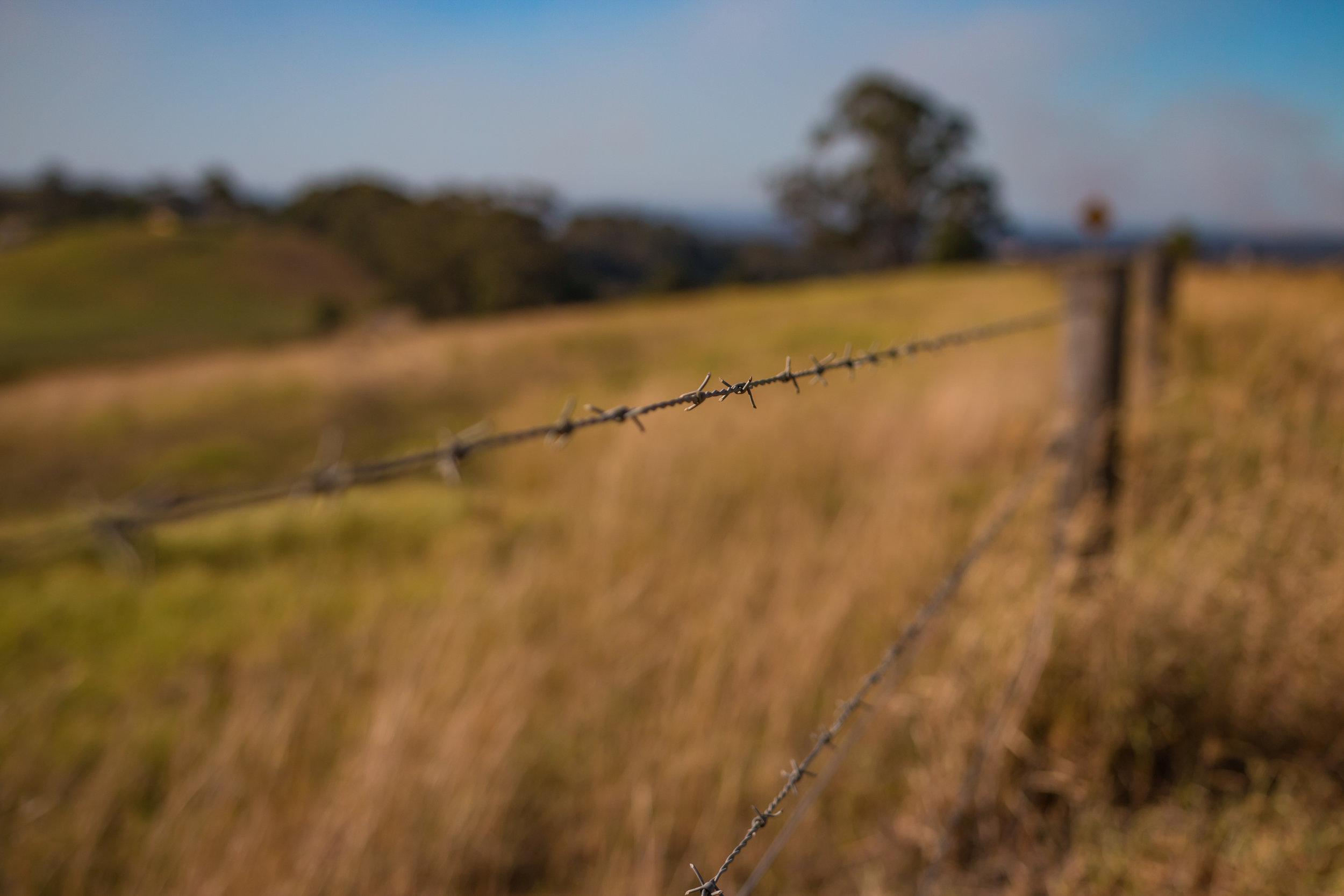 Hunter Valley Blog Post (Ajp) (6 of 11).jpg