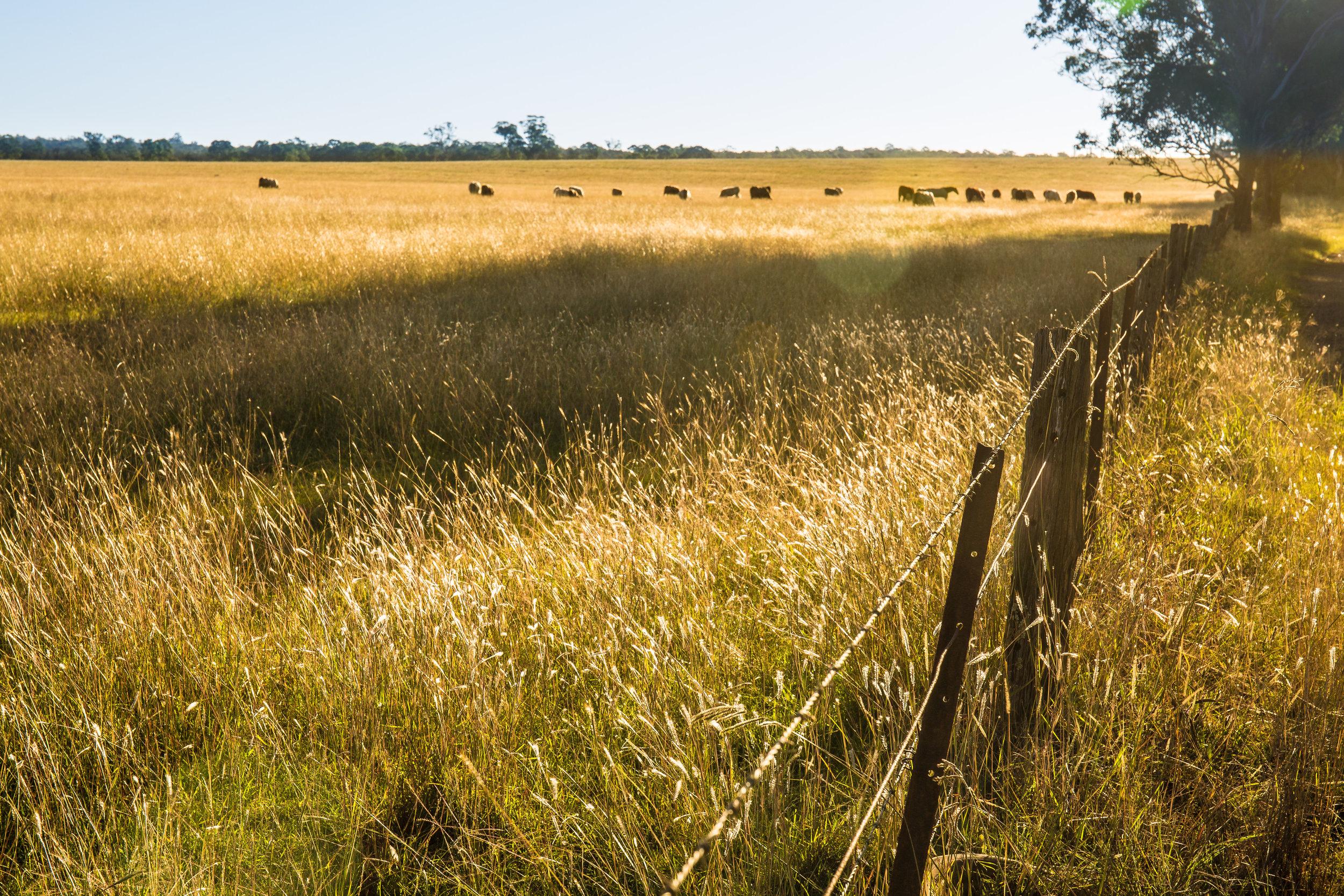 Hunter Valley Blog Post (29 of 39).jpg