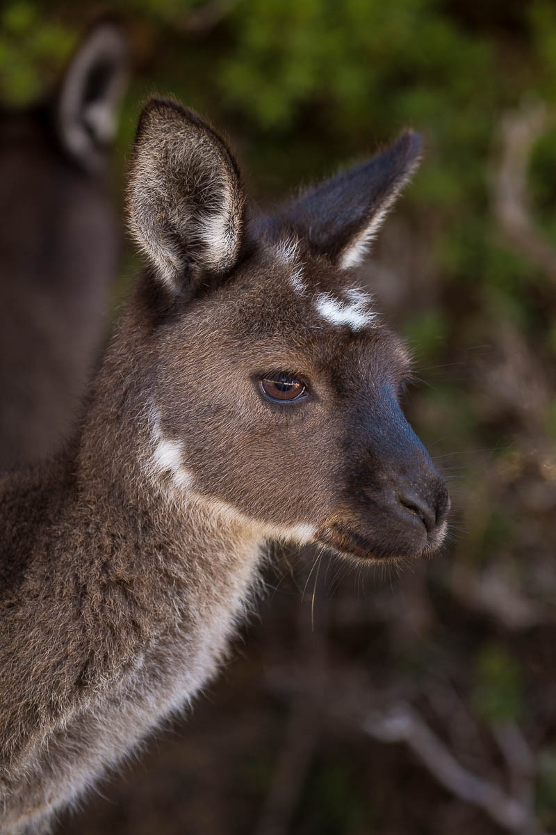 Kangaroo Island Blog Images (47 of 64).jpg