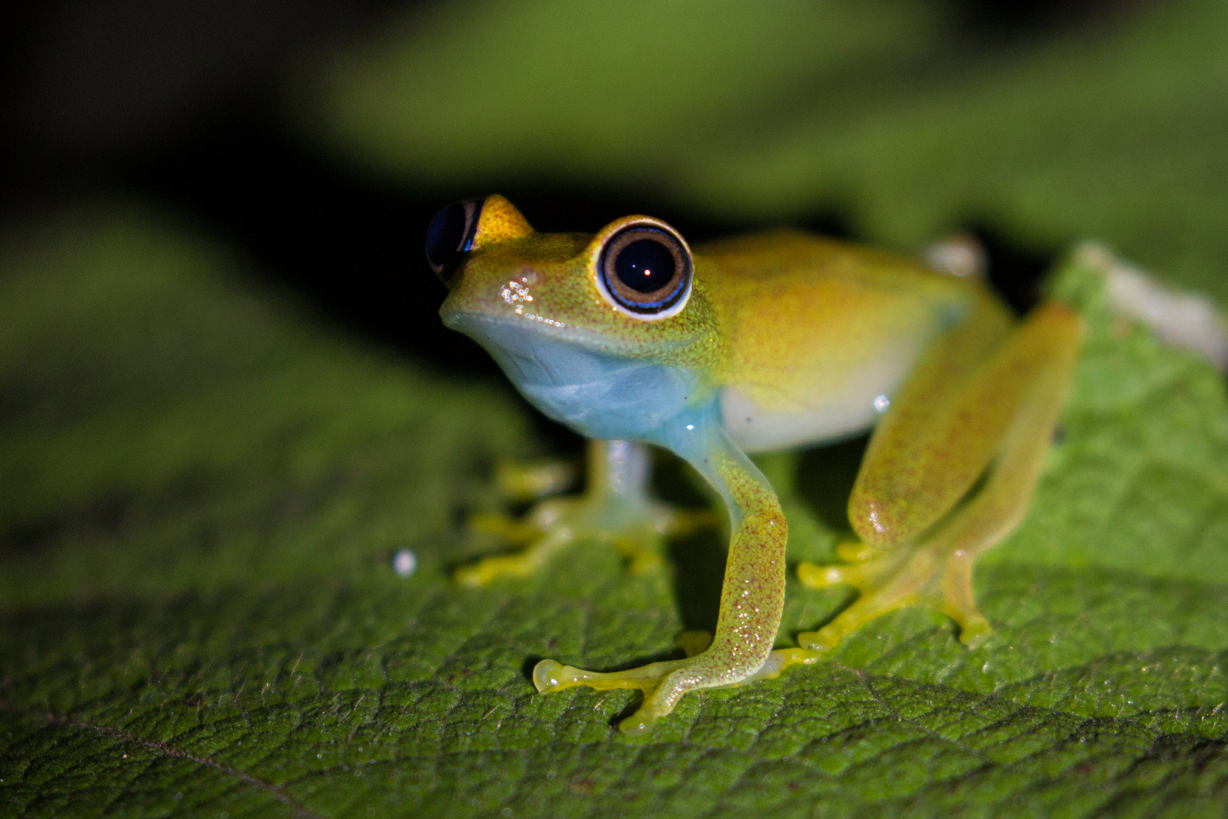 Frog at night.jpg