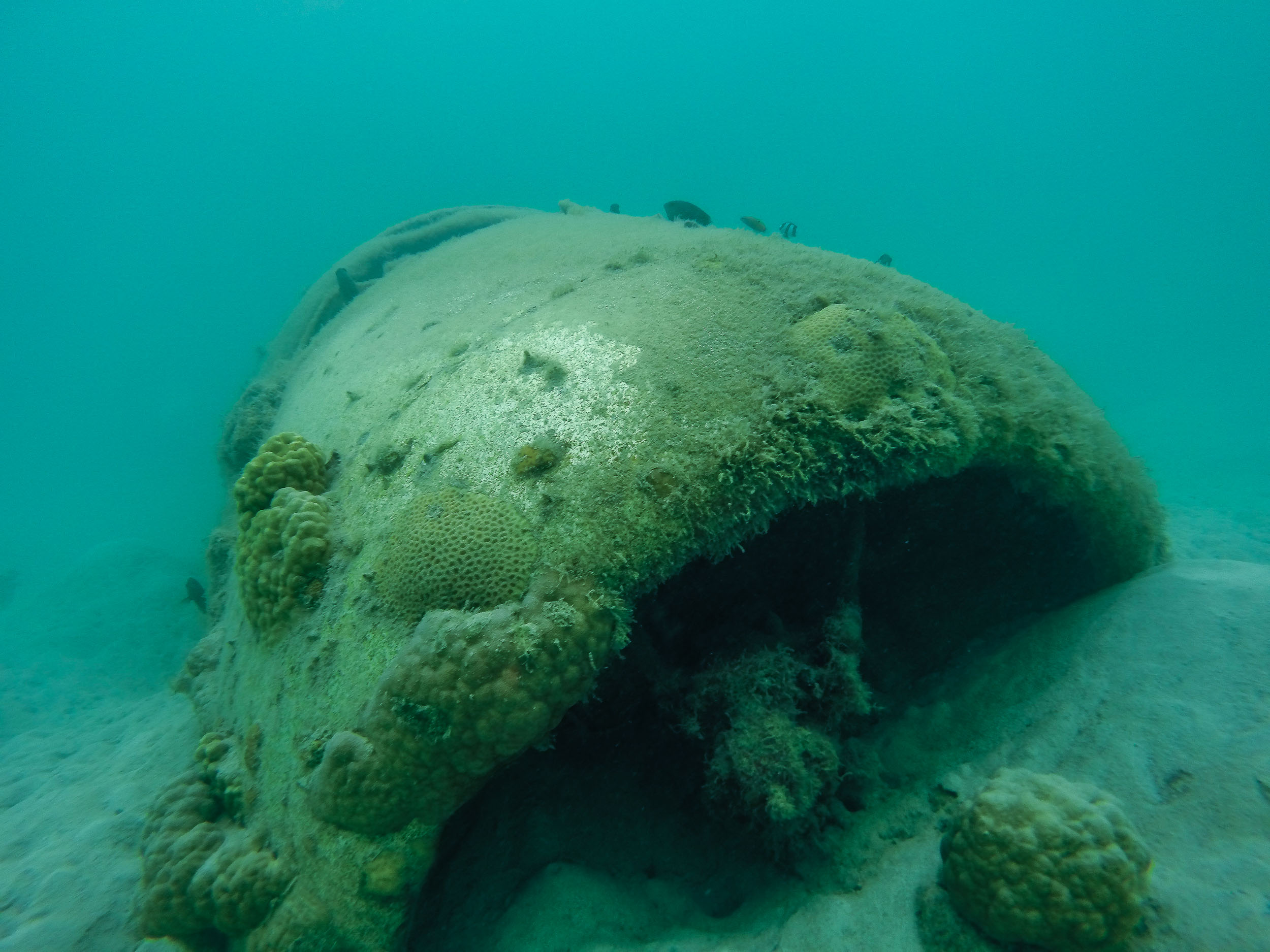 Snorkel on a World Ware 2 Plane Wreck (Nose)