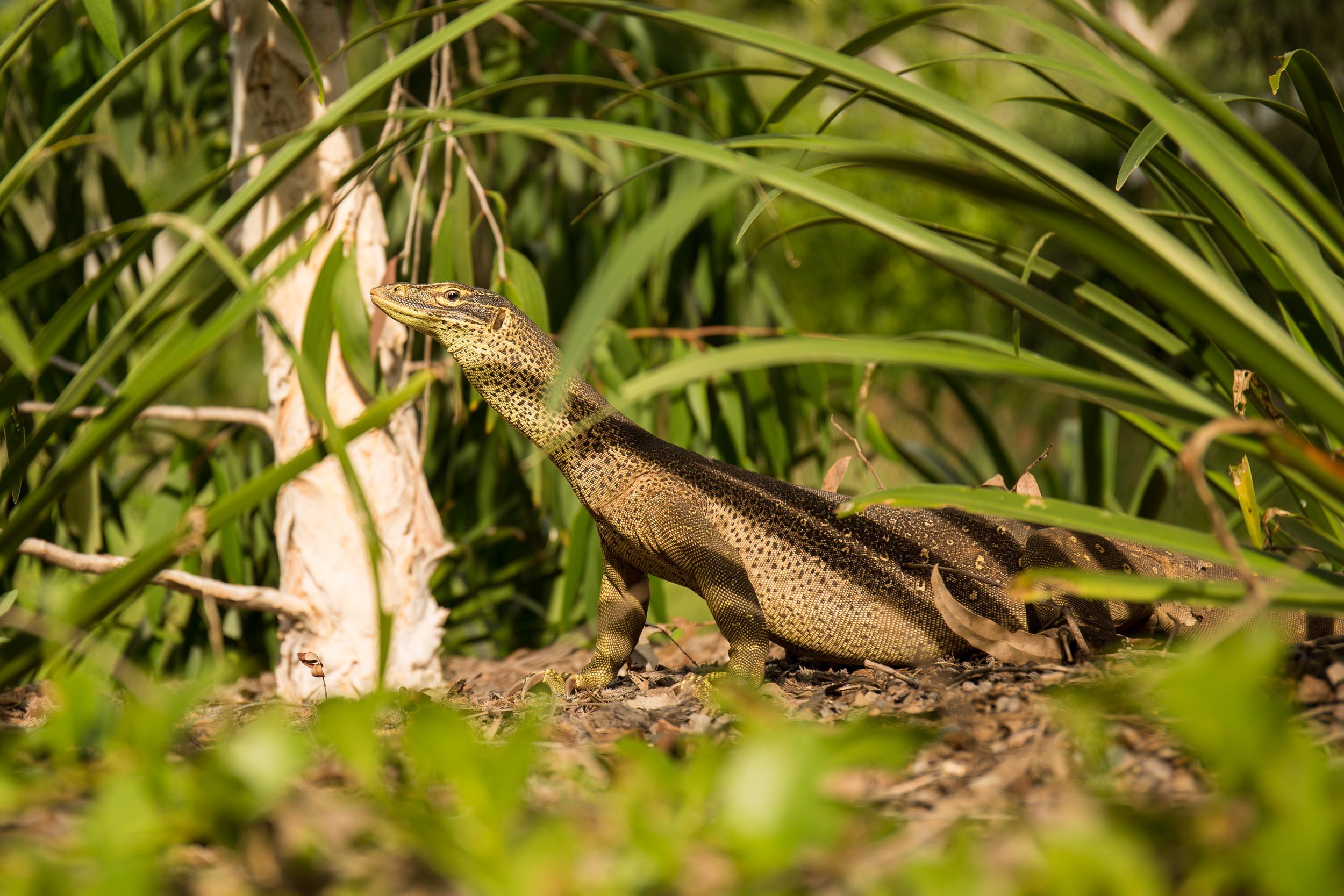 Lizard Island (9 of 42).jpg
