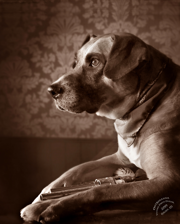 dog-portrait1.jpg