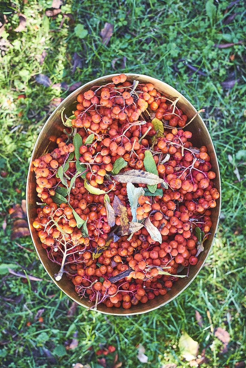 rowanberry harvest_24092017_SAF_SM_SM 8.jpg