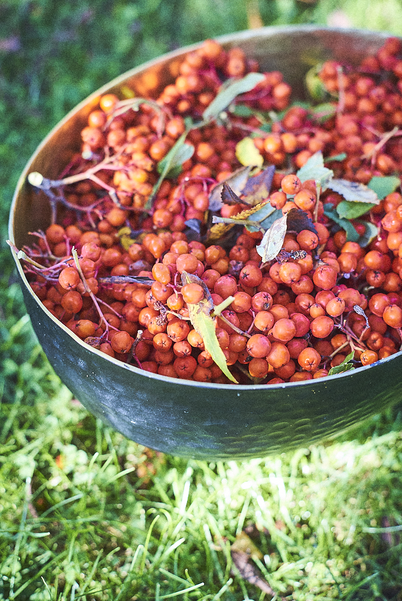 rowanberry harvest_24092017_SAF_SM_SM 9.jpg
