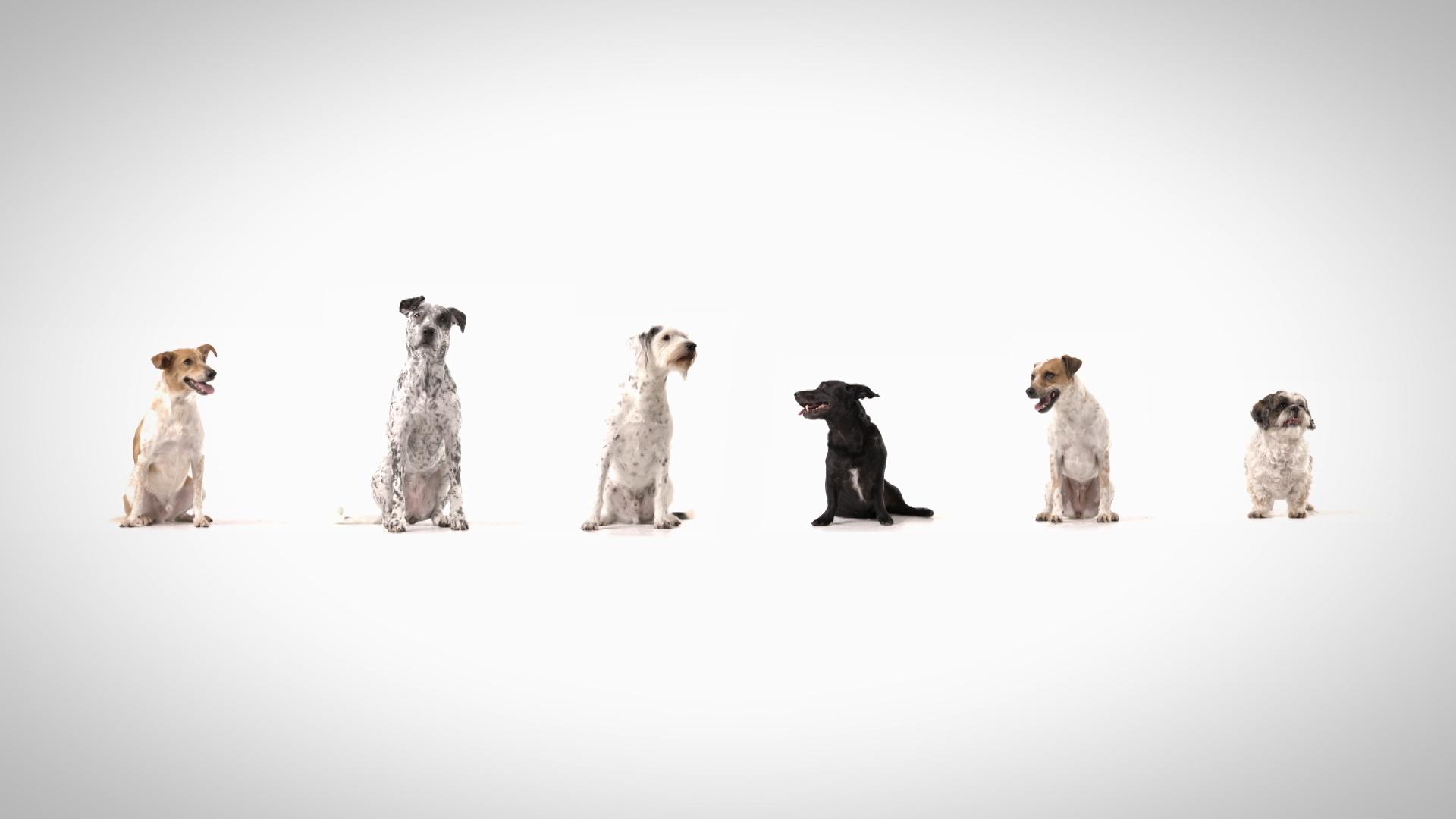 Doggie 1.jpg