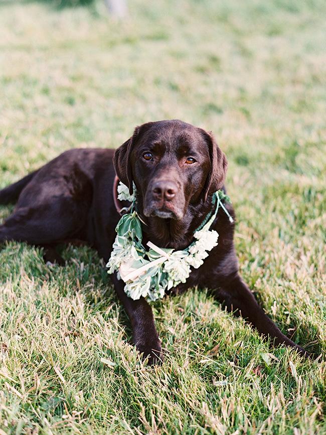 dog_at_wedding_264-copy.jpg