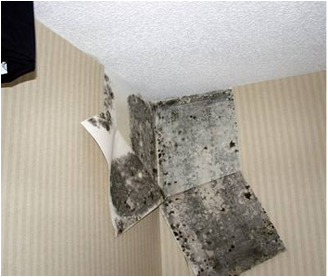 A HOME INSPECTION SAVED THEM FROM POSSIBLE HEALTH HAZARDS & THOUSANDS IN MOLD MITIGATION.