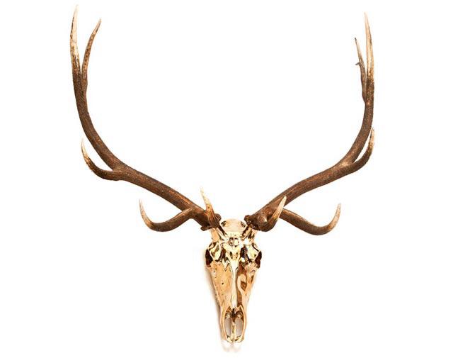 Ashley Tudor, Bronze European Elk Mount